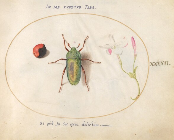 Plate 42: Jewel Beetle with a Plant Gall(?) and a Flower