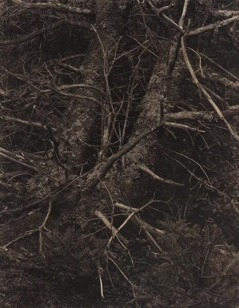 Woods, Maine [recto]