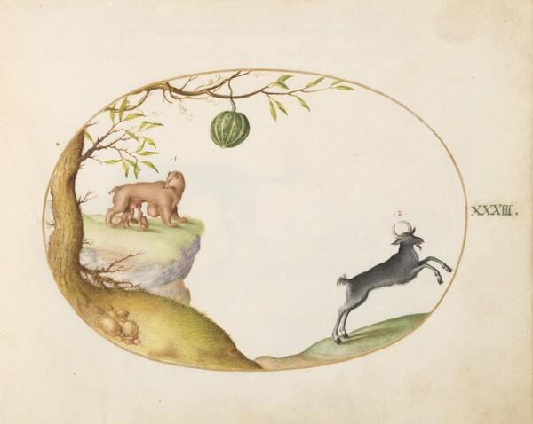 Plate 33: A Simivulpa (Opossum?) and an Ibex