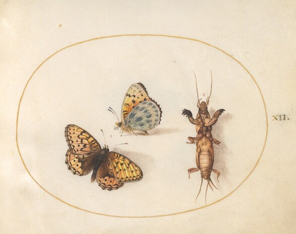 Plate 12: Two Views of a Butterfly (Silver-Bordered Fritillary?) and a Mole Cricket