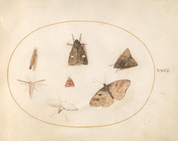 Plate 30: Seven Moths