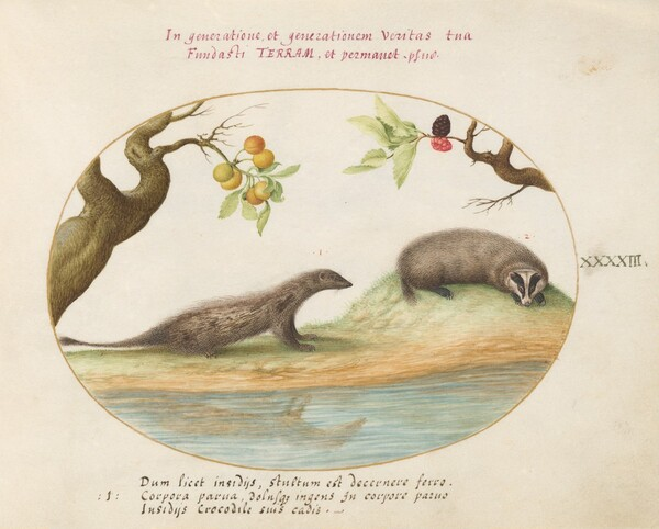 Plate 43: Mongoose and Badger with Fruit Trees