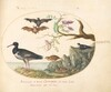 Plate 46: Bats, Quail, and Oystercatcher(?) by the Water