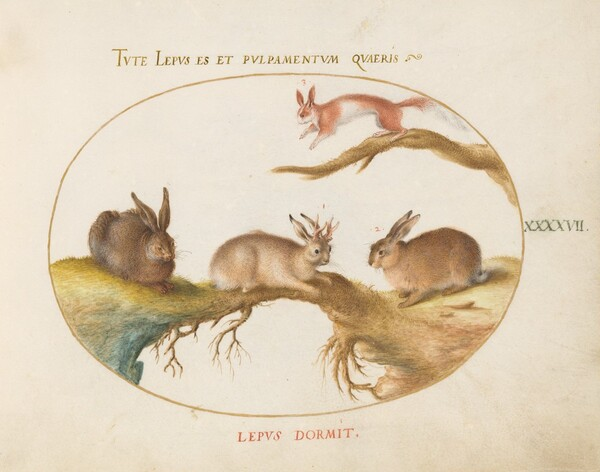 Plate 47: A Hare, Jackalope, a Rabbit, and a Spotted Squirrel