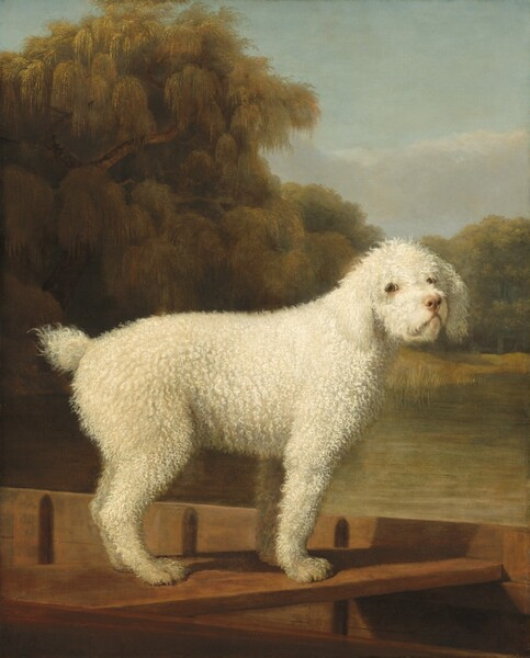 A dog with short, curly, white hair stands in a wooden boat facing our right almost in profile, though it turns its head to look at us in this vertical portrait painting. The dog spans nearly the width of the canvas and seems close to us. The dog's ears hang down the side of its face to its chin. Its eyes are light brown and rimmed in black and the lower lids are pink. The dog has a thick torso covered with tight curls, and a short puff of a tail. Its front legs are straight and the hind legs seem slightly bent. The dog stands a slat spanning the width of the boat, which is angled away from us to our left. The landscape behind the has a calm, sage-green body of water with a tall, willow-like tree to our left and a lower band of leafy trees to our right. A few smoke-gray clouds float over the treetops in an otherwise pale blue sky.