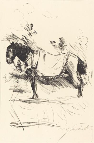 Reitpferd (Riding-Horse)