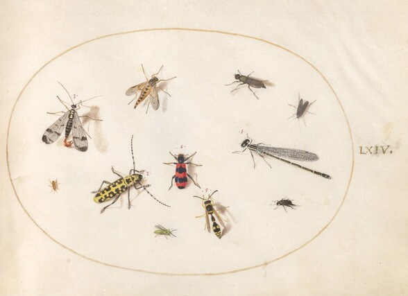 Plate 64: Eleven Insects, Including a Dragonfly and Longhorn Beetle