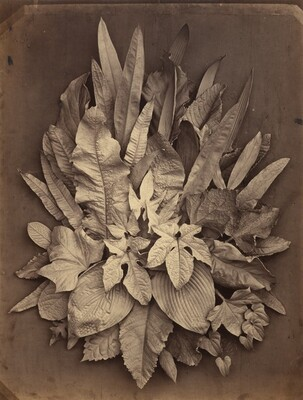 Charles Aubry, Untitled (A Study of Leaves), 18641864