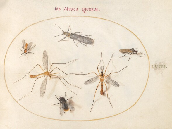 Plate 58: A Bee and Five Other Insects