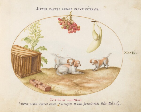 Plate 39: Three Puppies with a Crate and a Bunch of Grapes