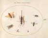 Plate 61: Seven Insects, Including Flies
