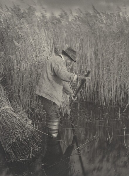 A Reed-Cutter at Work