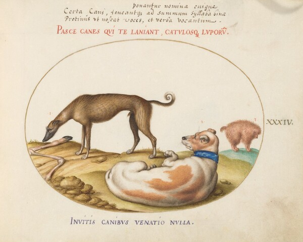 Plate 34: Three Dogs, Including a Mimick