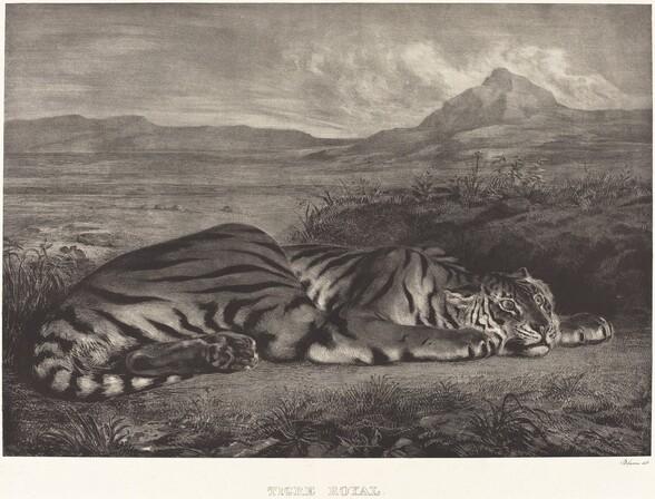 Royal Tiger (Tigre Royal)