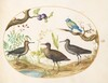 Plate 52: Blue Tit with Three Wading Birds and a Fig Tree