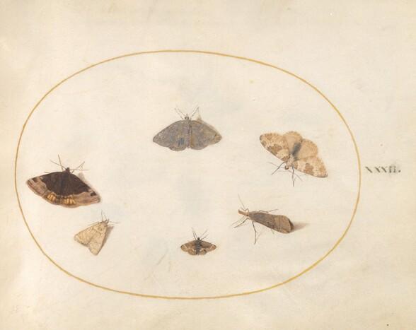 Plate 32: Six Moths