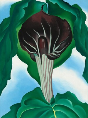 Georgia O'Keeffe, Jack-in-the-Pulpit No. 3, 1930