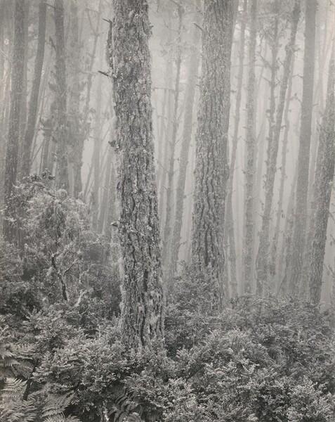 Del Monte Forest