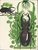 Beetles II (with electric lamp)