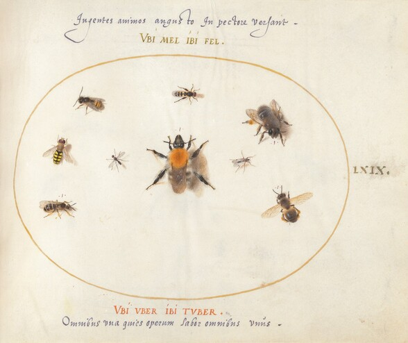 Plate 69: Nine Bees and Other Insects