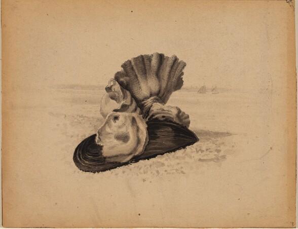 Shells, Watch Hill, Rhode Island