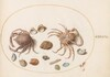 Plate 46: Two Crabs with Seashells