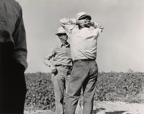 Cotton pickers and farm owners, Bakersfield, California