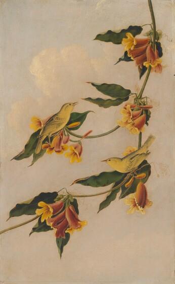 Joseph Bartholomew Kidd, after John James Audubon, Yellow Warbler, 1830-1833