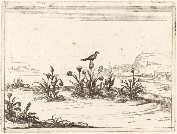Bird Perched on a Thistle