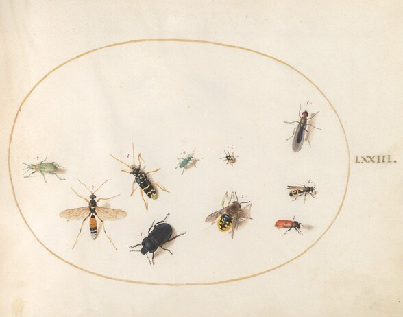 Plate 73: Ten Insects