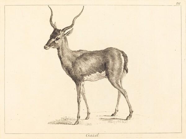 Gazel (Gazelle)