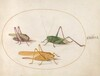 Plate 46: Three Grasshoppers
