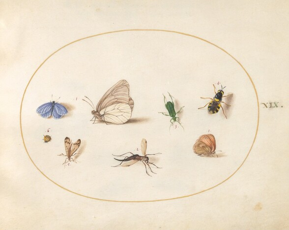 Plate 19: Two Butterflies with Five Other Insects
