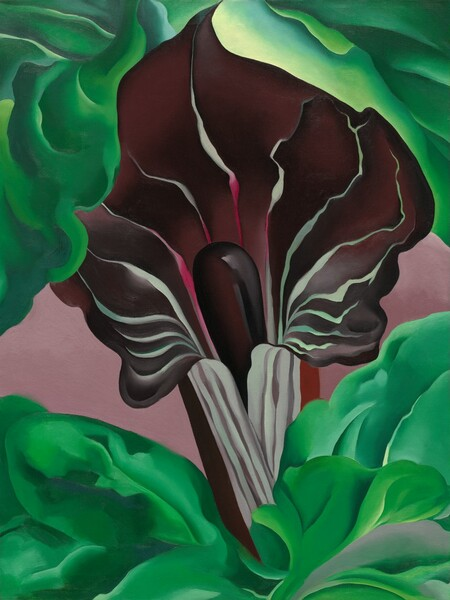 A close-up view of a deep plum-purple jack-in-the-pulpit flower surrounded by emerald-green leaves fills this vertical painting. The flower is narrow at its base, where it is striped with white and pale lilac, and it flares open like a trumpet in the top half of this composition. The unfurled petal is streaked with wavy white and magenta-pink veins around a deep purple tube-like stalk emerging from inside the base. Leaves in spring and kelly green billow up around the base of the flower along the bottom of the canvas, and more leaves surround the top of the flower as if in an embrace above. The area behind the pointed, curling tip of the flower glows with a lemon-lime yellow. The mauve-colored space behind the flower and between the two bands of green leaves reads as a background.