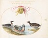 Plate 39: Three Waterfowl, One with Blue Feet, Beneath a Garland of Produce