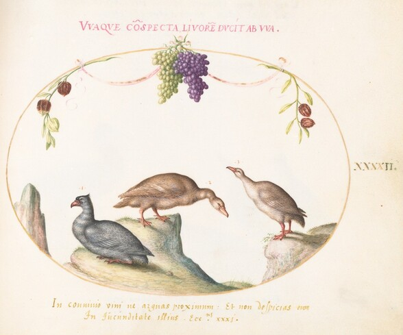 Plate 42: Two Gray Geese with a Third Bird and Hanging Grapes