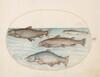 Plate 4: Four Salmon
