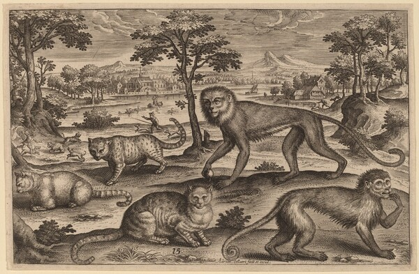 Three Cats and Two Monkeys