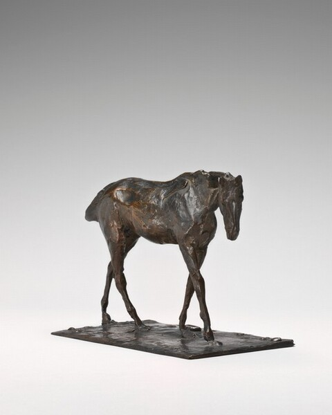 Thoroughbred Horse Walking, Part of the Neck Missing