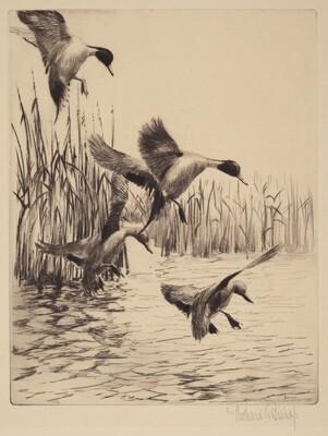 Fall Ducks
