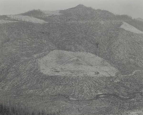Area Clearcut Prior to 1980 Eruption Surrounded by Downed Trees--Clearwater Creek Valley--9 Miles East of Mount Saint Helens, Washington