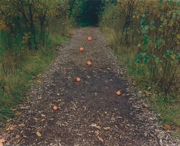 Altered Landscape: Six Oranges