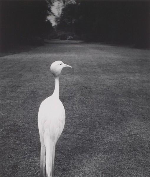 Evening at Kew Gardens