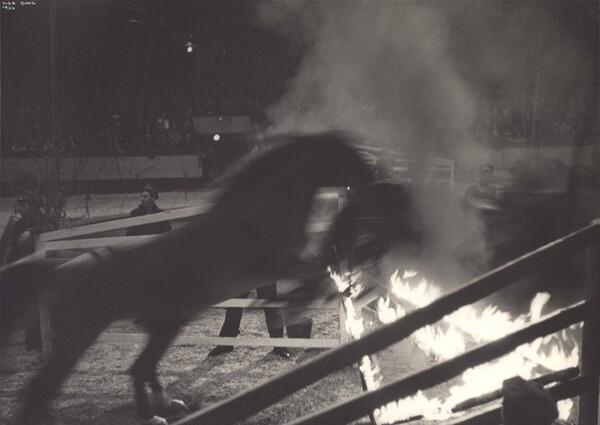 Horse Act, Circus, New York