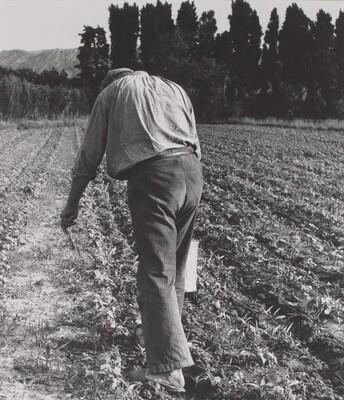Untitled (Farmer in Field)
