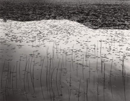 Reeds, Leffert's Pond