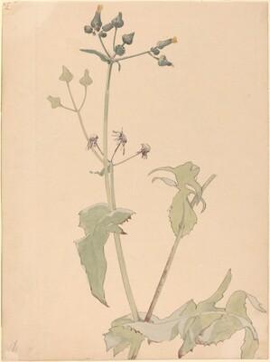Botanical-Milt