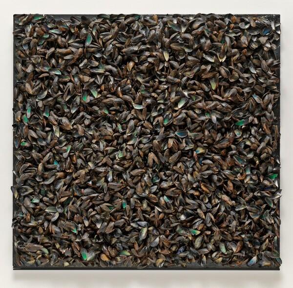 Panneau de Moules (Panel of Mussels)