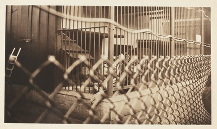 Untitled (Tiger in cage)