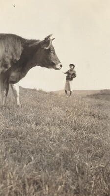 Untitled (Woman feeding cow)